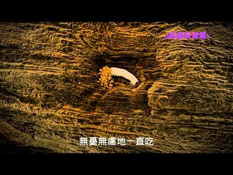 《昆蟲捉迷藏》森林中饒勇善戰的鐵甲武士【鉗子蟲:鍬形蟲】 - YouTube