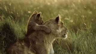 Animais (Music: Tarzan (portuguese))
