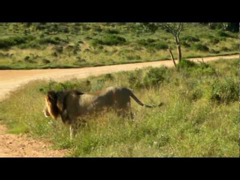 GoPro Safari – Gorah Elephant Park – Addo – South Africa