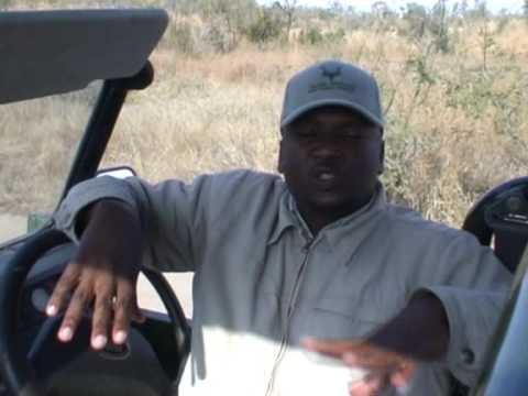 Antylopa Kudu w Parku Krugera