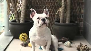 2 Cão Danado - Eu Tenho Um Cão de Estimação - 2ª Temporada