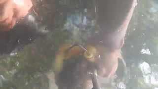 pesca de mojarra tilapia con arpon en el rio balsas 2
