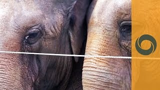 USA: Circus Elephants In Florida To Retire And... Help Fighting Cancer!