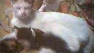 Cat Babies with their mom