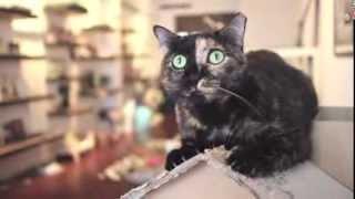kindakid @ The Company of Cats