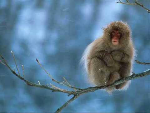 dave-matthews-proudest-monkey-crash-audio-humblemonkey1