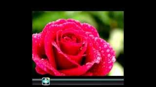 Allahim Derim #FEAT MELIH , MOMO MAZAK UND ABDULLAH:&