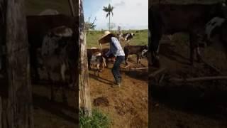 Dança Moda dos traiado PANCANEJO  PARTICIPAÇÃO TRIO DA FAZENDA...