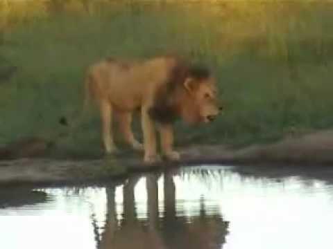 Kruger National Park game drive, Sabi Sand, South Africa