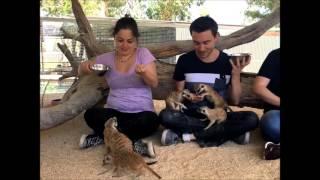 Meerkat Encounter (Live Photos Compilation)