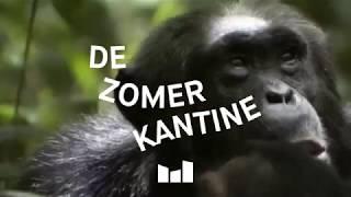 De Zomerkantine - every Saturday in June, July & August