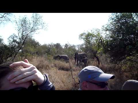 Elephants Having Breakfast – Mala Mala, South Africa