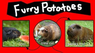 Furry Potatoes