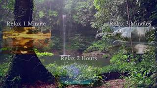 Relaxing Sounds   Rainforest Animals, Waterfall and Rain Sounds