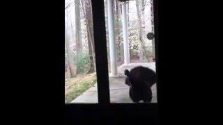 A turkey burglar