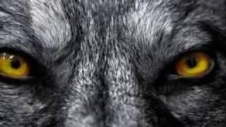 EVA'S BULLET    WOLF' SMILE