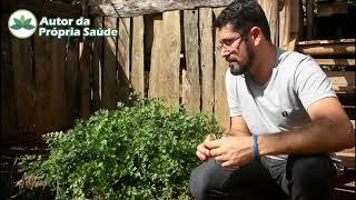 Autor da Própria Saúde - Dica de Planta Medicinal #Salsa