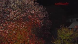 ACIDRAP/PARANOIA TYPE BEAT (solitude)