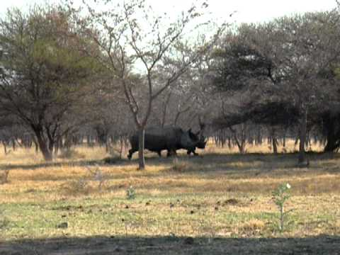 Marakele NP – Rhino's @ our campsite – South Africa
