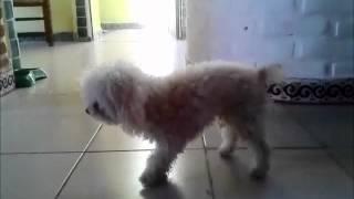 Baile la lambada Toto el porterito