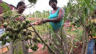 Jamaican Patwa — Country Folk (Jamaica 101)