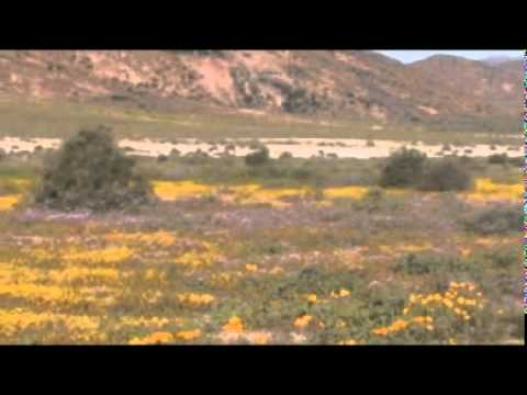 Springbok – South Africa Travel Channel 24