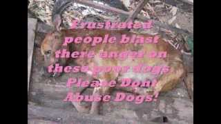 Animal Abuse Public Service Announcement