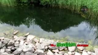 Clonbur Woodland, Co. Galway (Full HD)