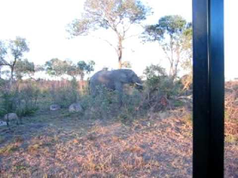 Elephants, Skukuza Camp in Kruger National Park in South Africa