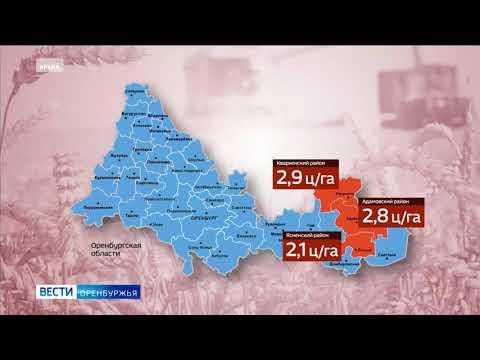 В 30 из 42 х муниципальных образований Оренбуржья продолжает действовать режим ЧС по засухе
