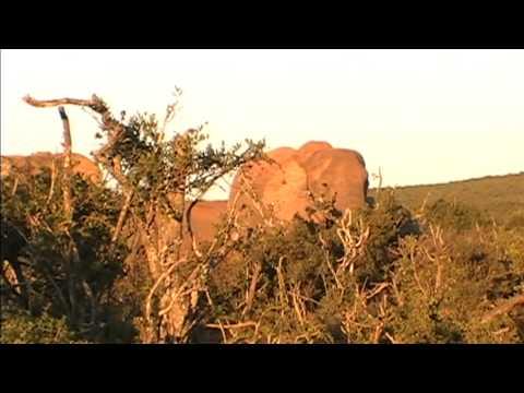 Safari/Elephants at Addo Elephant National Park
