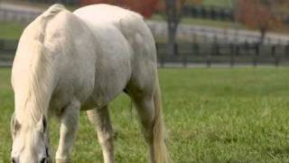 Cavalo de Pau - Pedro Abrunhosa