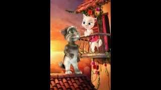 Konuşan kedi   Yozgat Sürmelisi