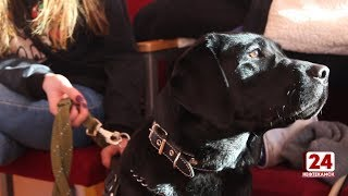Впервые в городе прошел конкурс, посвященный собакам - поводырям