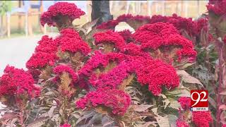 Lahore | People enjoying impressive exhibition of colorful flowers organized at Jilani Park