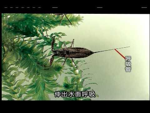 水中生物 - YouTube