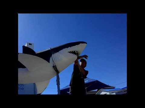 Great White Shark miramiramiramira