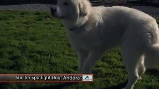 Dog of the Week: Andora