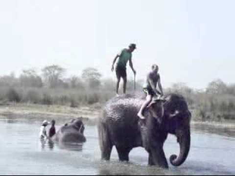 Jungle safari in Nepal.