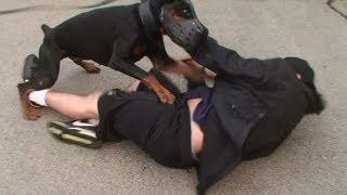 Doberman Attack Training (K9-1.com)