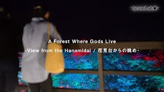 A Forest Where Gods Live  - View from the Hanamidai / 花見台からの眺め -