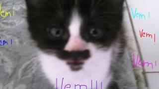 Carrossel dos gatinhos