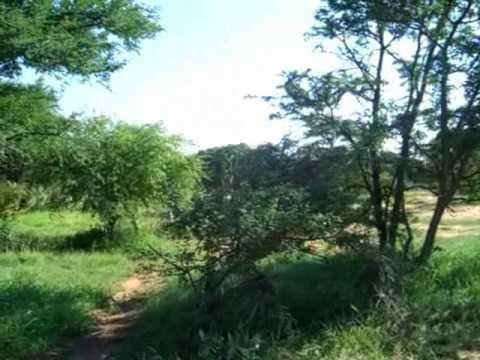 Safari Bush Walk