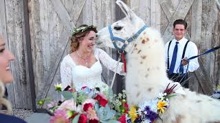 Llama Wedding Surprise!