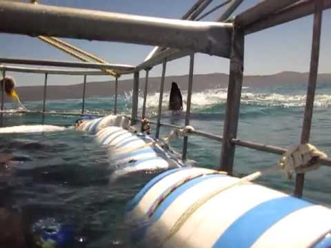 Great White Shark Cage Dive – Gansbaai – South Africa