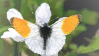 Como una mariposa