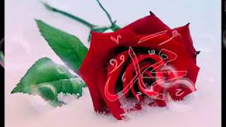 Mustafa tereci  Gül yüzlü sevgilim