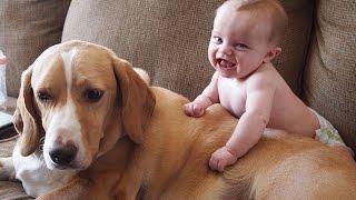 Simpatici Gatti E Cani Amano I Bambini. Compilazione [HD]
