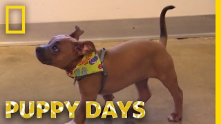 A Rising Star | Puppy Days