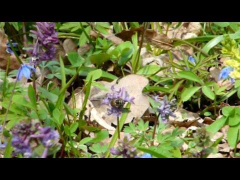 В лесу P1120999 / Spring in the woods